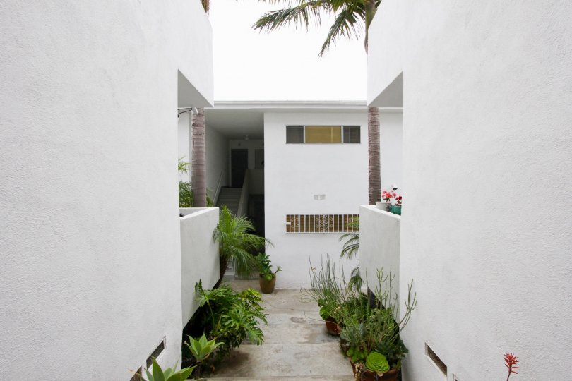 Plant lined corridor with white walls in Strand IV, Santa Monica, California