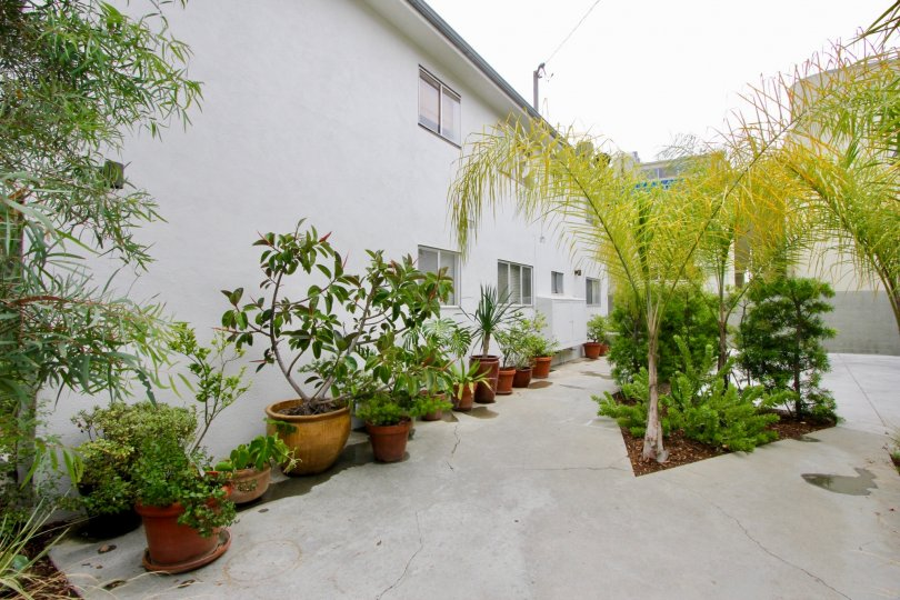 This is a back alley with a split sidewalk along the wall of an apartment. There are potted plants and trees along the edges.