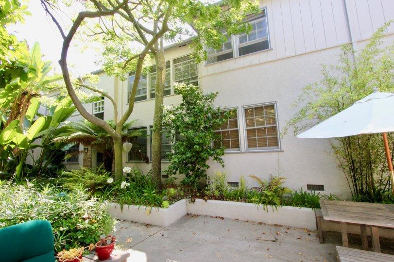 Yale Street, Santa Monica, California, Landscape, Trees, Shrubs, Bushes, Picnic table