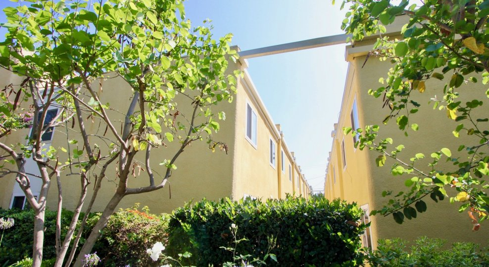 Trees and a stunning view between the buildings at Yale Villas in Santa Monica, California