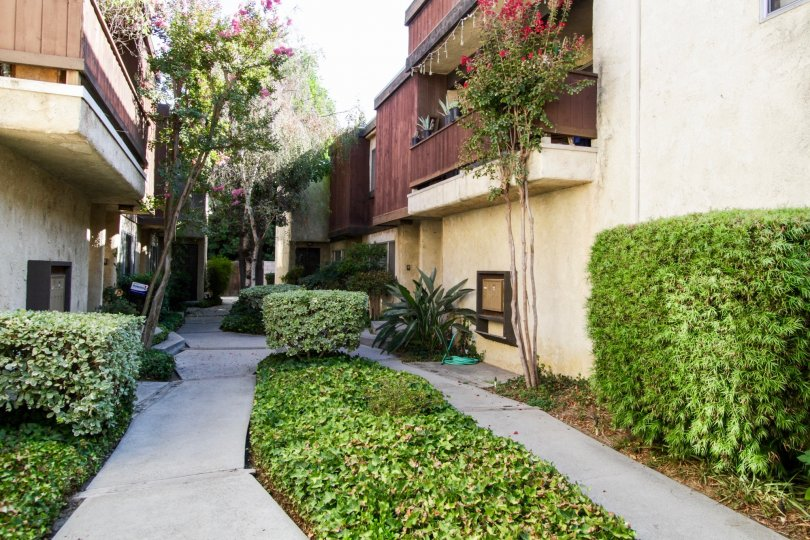 The landscaping at 13108 Moorpark St in Sherman Oaks