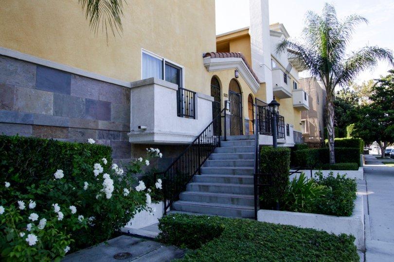The stairs at Palcita De Oro