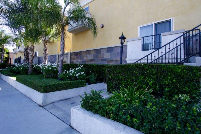 The landscaping around Placita De Oro in Sherman Oaks