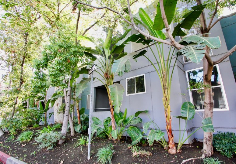 The landscaping around Sanborn Condos in Silver Lake, California