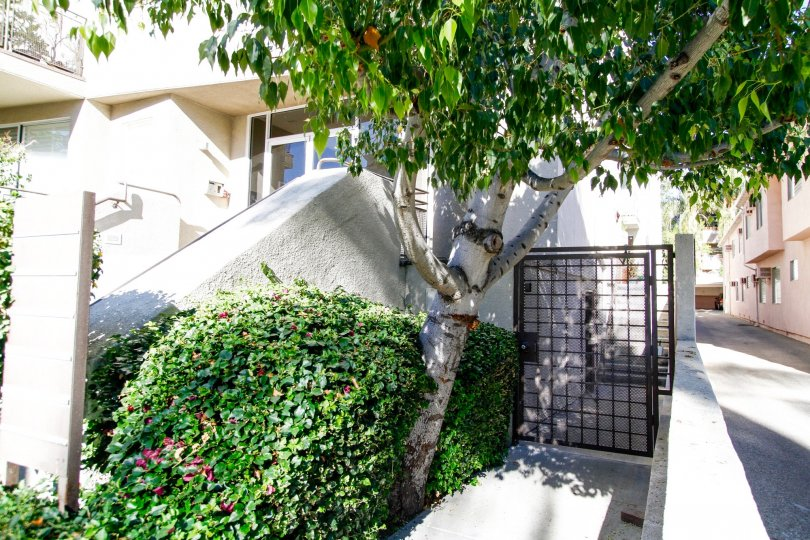 The landscaping at 4236 Longridge Ave in Studio City