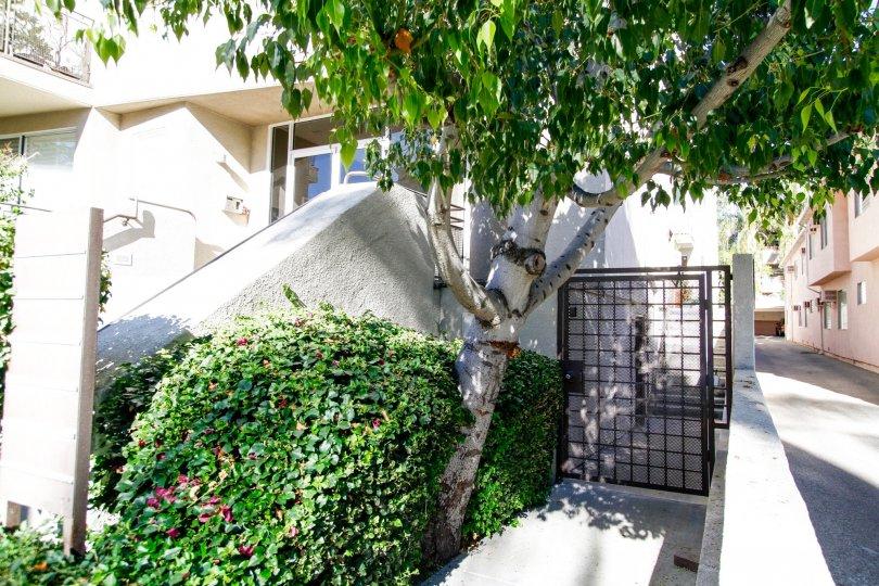 The landscaping at 4236 Longridge Ave in Studio City