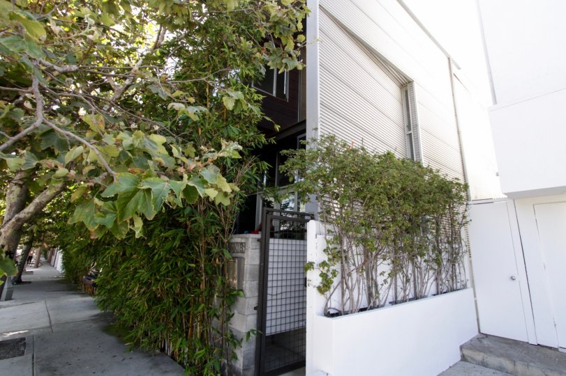 The landscaping around Canal Lofts in Venice