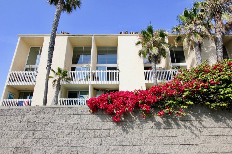 A sunny day with palm trees by apartments at the Navy Estates in Venice, CA