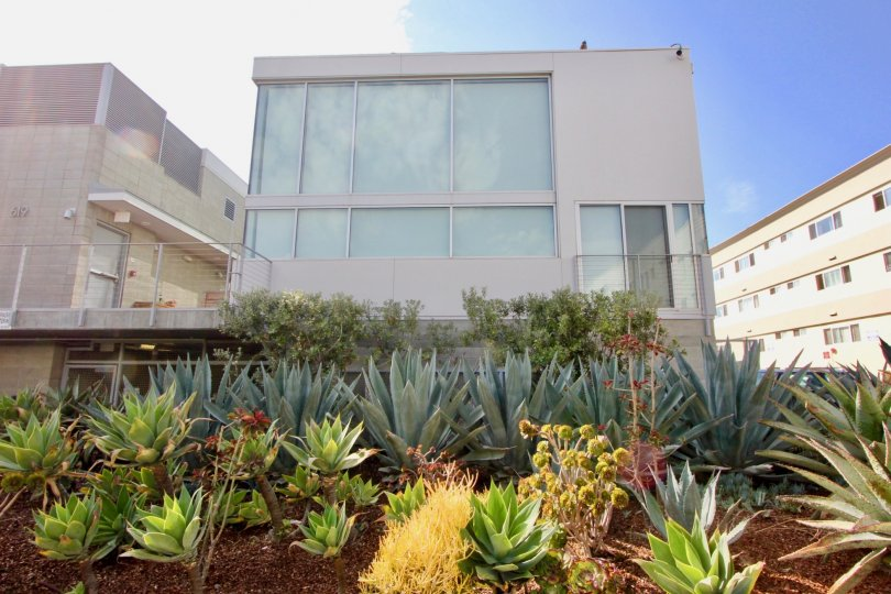 Modern Venice apartment building with gorgeous succulent landscaping and large windows.