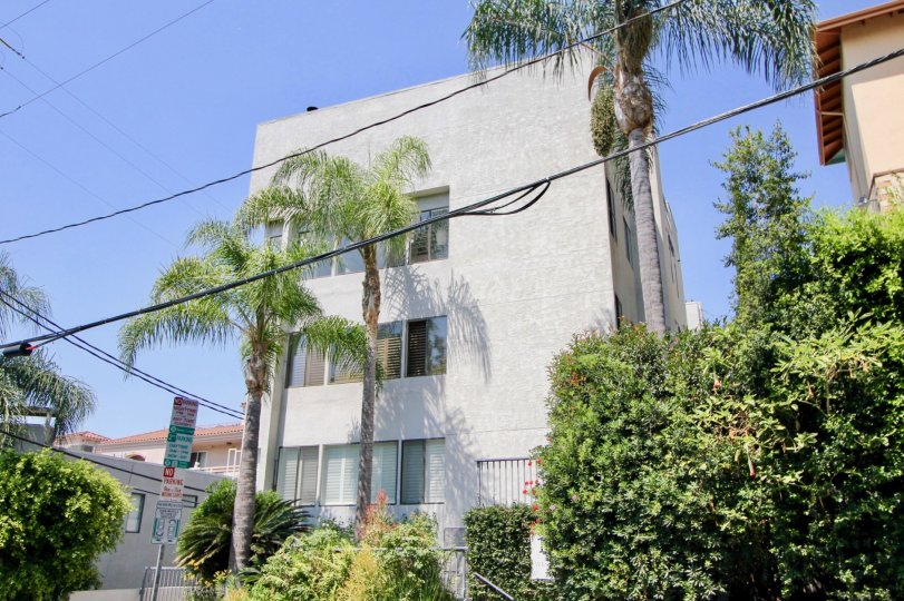 a white building in 1021 Westmount with palm trees in the front