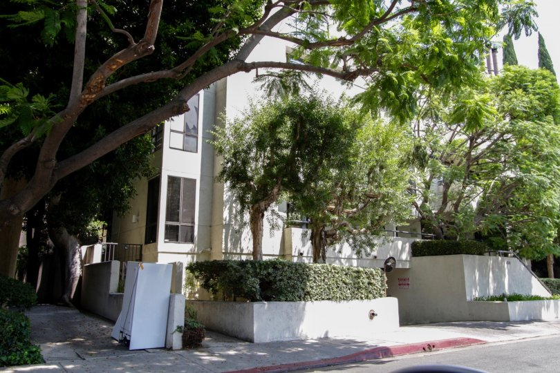 The landscaping around 656 West Knoll in West Hollywood