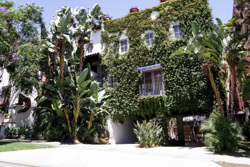 The greenery that has grown onto the 7 Fountains building in West Hollywood
