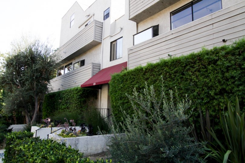 The hedges around 839 Larrabee in West Hollywood