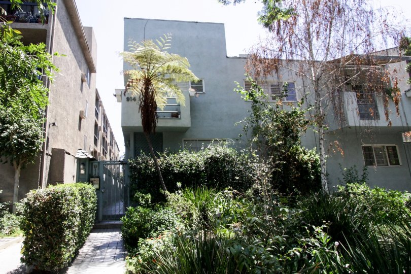 The landscaping seen at 914 Kings in West Hollywood