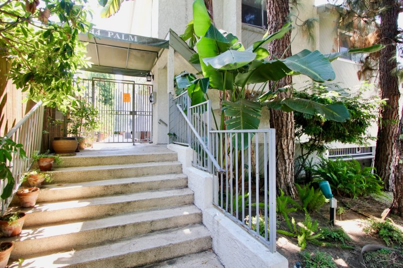 Steps and trees at entrance to 944 Palm in West Hollywood, California
