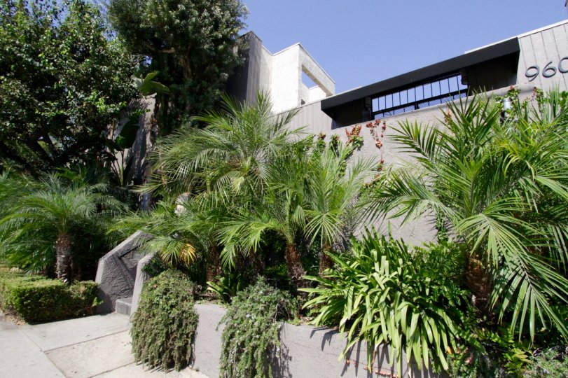 The landscaping at 960 N San Vicente