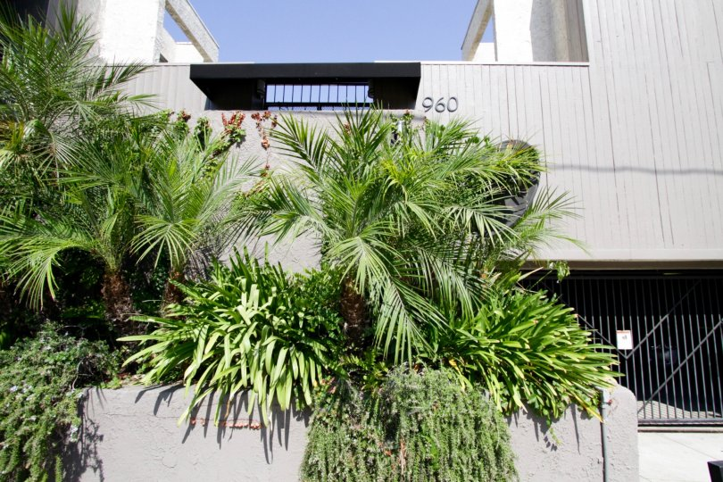 The greenery seen at 960 N San Vicente in West Hollywood