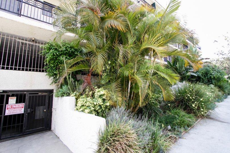 The landscaping around Bonita Villas in West Hollywood