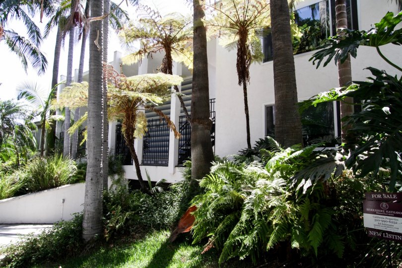 The landscaping around Harper Regency in West Hollywood