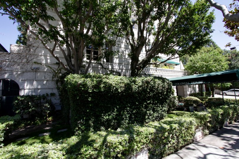 he hedges around The Colonial House