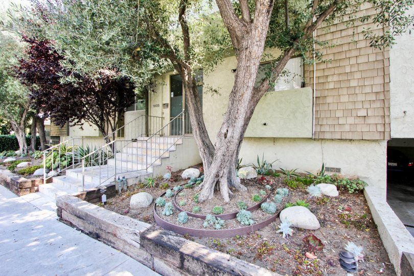 aspen house west la california home tree landscaping rocks