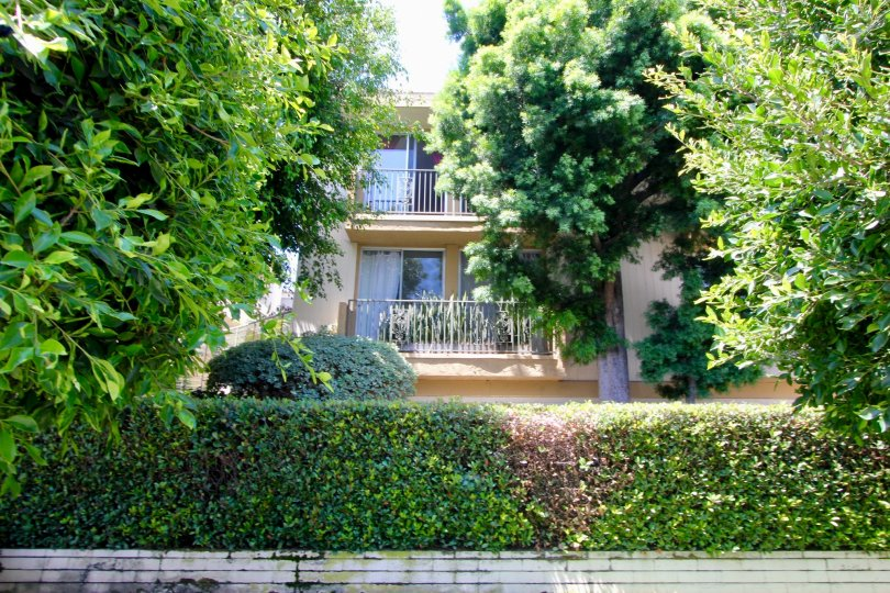 Unbeatable greenery surrounding Barrington West Gardens apartment, West La, Caliofornia