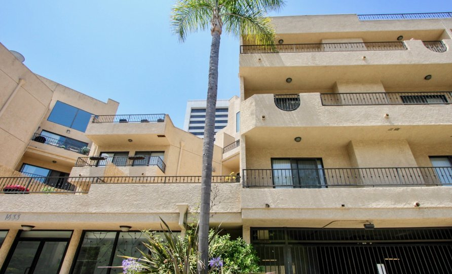 bentley regency west la california apartment homes palm tree