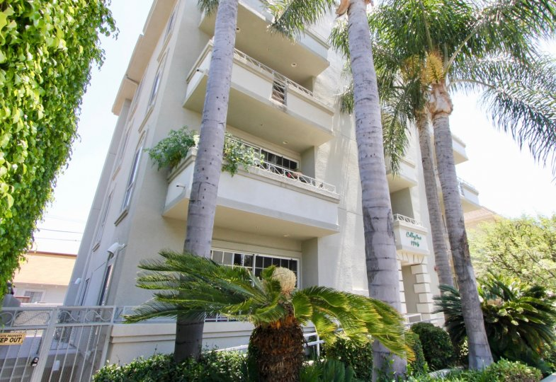 colby crest west la los angeles california apartment homes palm trees