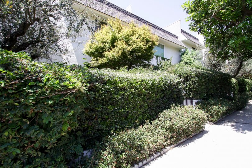 The hedges around 1745 Selby
