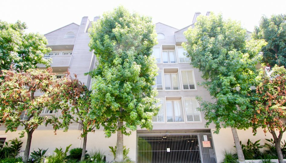THE TREES TAKE PLACE IN THE FRONT OF THE APARTMENT. ITS VERY BEAUTIFUL SCENORY.