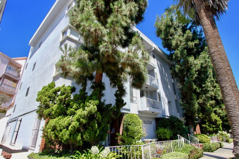 White walls of Somerset House and her green trees, Westwood, California
