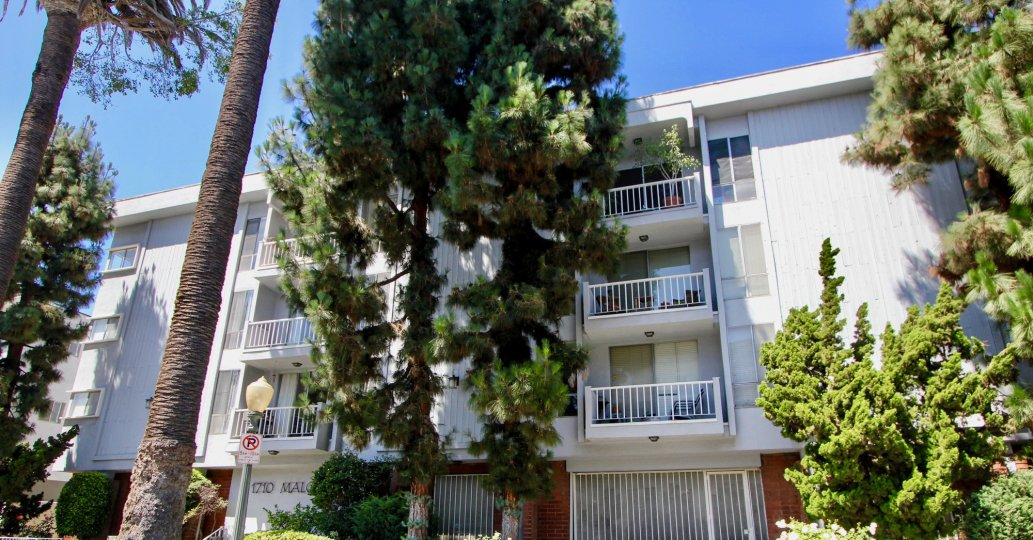 A flat with white balconies and green pine trees in Westwood.