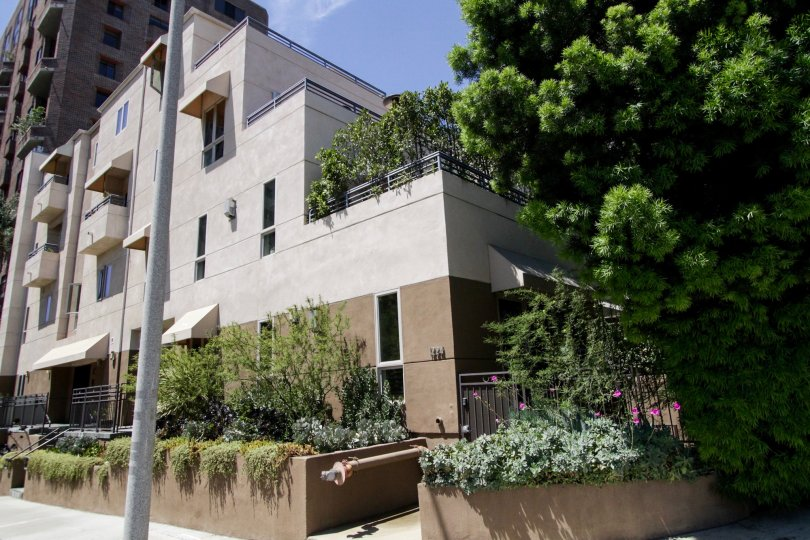 The landscaping at Thayer Heights in Westwood