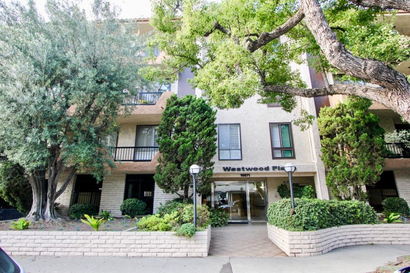 Great apartment living in tree lined Westwood Place