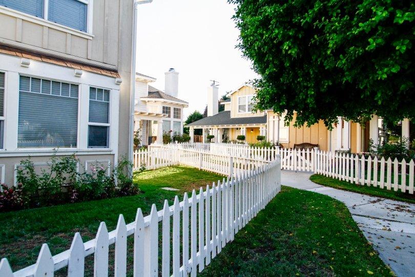 The yard around Canoga Park Picket Fences