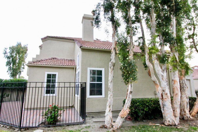 An olive green California Renaissance home with old, pictureseuqe trees in the yard.