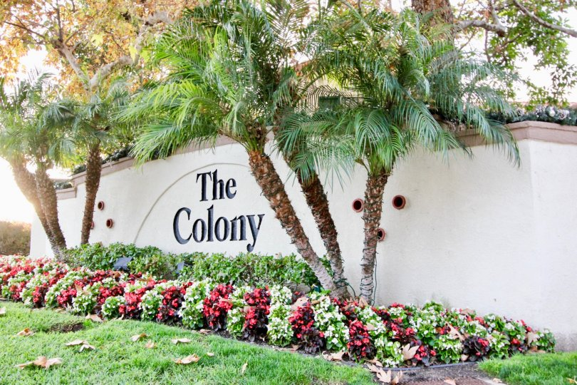 Beautiful greenery surrounding the entryway to Greystone Colony community located in Aliso Viejo, CA.