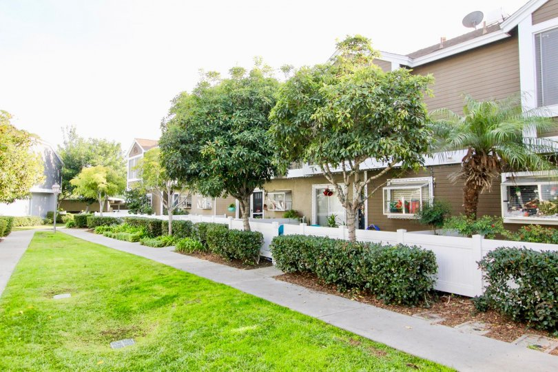 Full, verdant trees and a paved sidewalk line the exterior of Morningside Terrace homes.