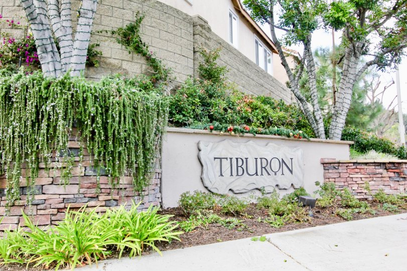Come enjoy the gardens of green in your new Tiburon home