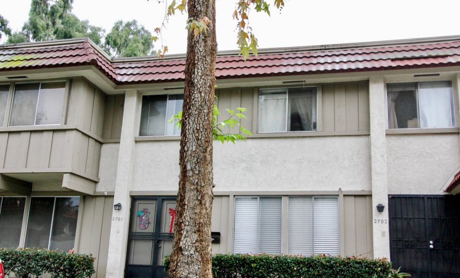 An outside view of Parkdale apartments with a tall tree in the front view