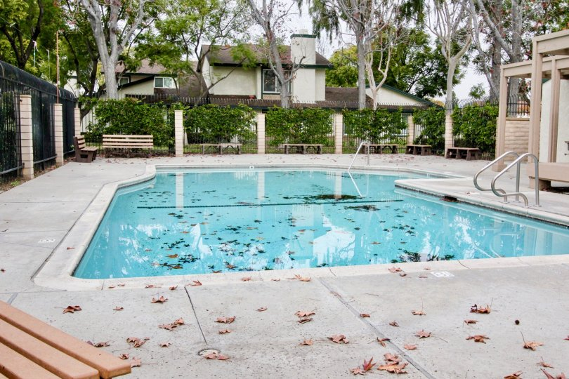 THIS IMAGE SHOWS THE SWIMMING POOL IN CAMERON PARK, WHICH SHOWS LOT OF PLANTS, TREES ARE THERE
