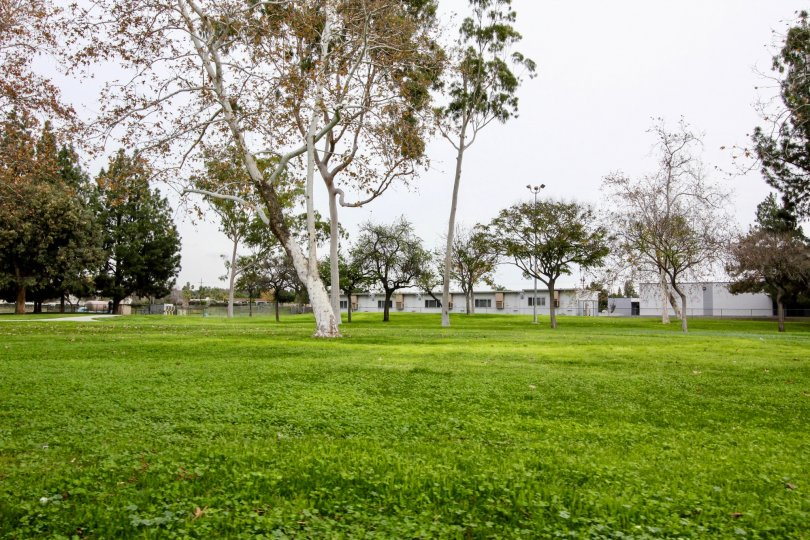 THIS IMAGE SHOWS THE BEAUTIFUL GARDEN IN BUENA PARK, THAT SHOWS GREENY LAWN WITH TREES