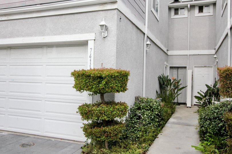 Bushes are decorated by cutting it and placed at the pathway of apartment in Western Bay Estates