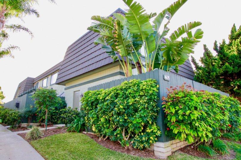 Mesa Verde Villas Costa Mesa California house very super fully coverd for garden in the house