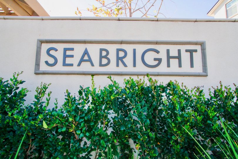 The houses in the seabright is the residental area with trees, plants with clean street road.