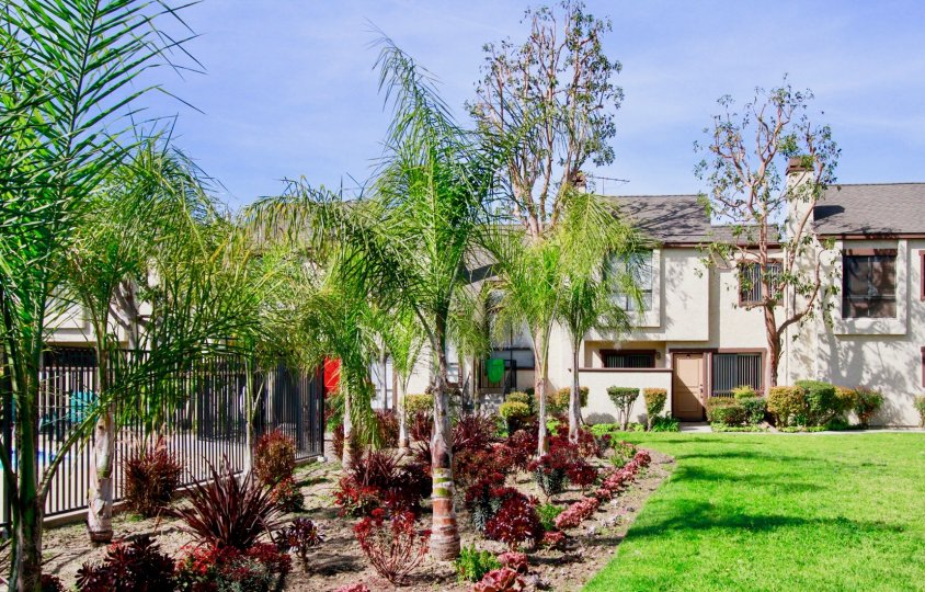 Embassy Park Townhomes Cypress California buildings covered by long trees and plants