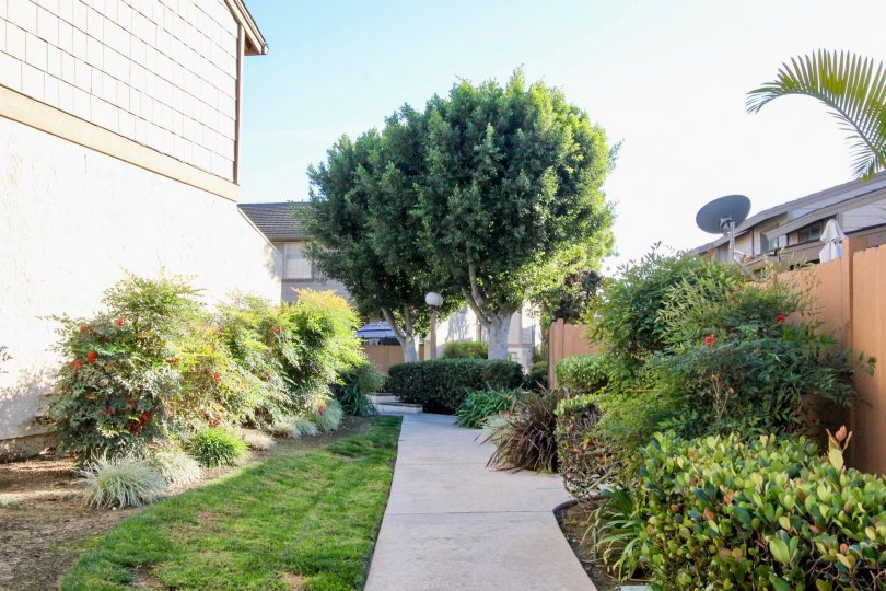 sidewalk surrounded by bushes and trees in Amberwood community in Fullerton, California