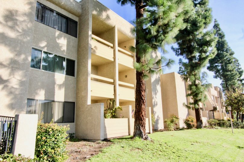 Tallest trees are grown in similar spaces which is nearer to apartments in Fullerton Fountains