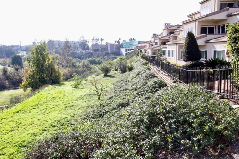 The hilly area in the Greenview Terrace with full of green grass, shrubs, ornamental plants near the beautiful buildings.