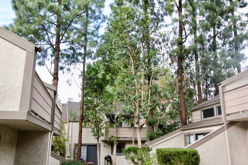 Tall trees in between building at Hidden Lakes Fullerton, CA